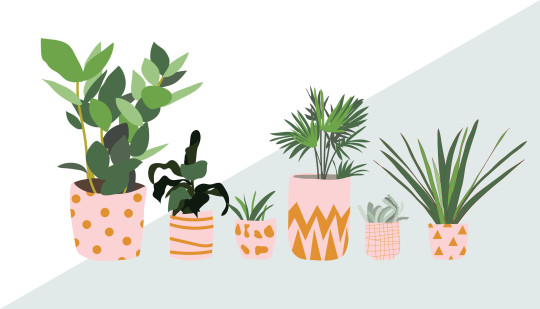 potted plants collection.