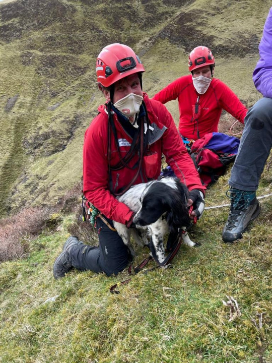 Louis the Spaniel was saved by the Moffat Mountain Rescue Team after plunging 300ft down at Grey Mares Tail waterfall near Moffat in Dumfries and Galloway,on his first hillwalk - and miraculously survived. See SWNS story SWSCrescue. A spaniel who plunged 300ft down a waterfall on his first hillwalk and miraculously survived will be sticking to flat terrains in future. Louis, a 15-month-old Springer spaniel, was feared to have died when he vanished from sight while out for a walk at Grey Mares Tail waterfall near Moffat in Dumfries and Galloway, at 12.30 last Wednesday (April 14). Owners Helen McKean, 55, and husband David, 56, faced an agonising five-hour wait while the naughty pooch was rescued. For 45 minutes they believed their dog had died - until he started barking.