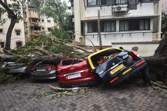 MUMBAI, INDIA - MAY 18 : Cars are crushed by a fallen tree following heavy rainfall in Mumbai, India, on May 18, 2021. The Maharashtra state capital was largely spared from any major damage as Cyclone Tauktae, the most powerful storm to hit the region in more than two decades, came ashore in neighboring Gujarat state late Monday. (Photo by Imtiyaz Shaikh/Anadolu Agency via Getty Images)